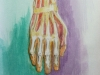 anatomy of the hand bones ligaments