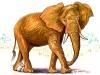 mouse bites elephant illustration by Zamudio