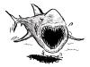 zamudios studio illustration shark