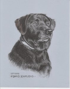 "Charcoal pet portrait 8x10 ""oso"" on blue color tint stock 8x10"