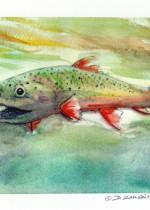 Marine, trout, watercolor,david zamudio