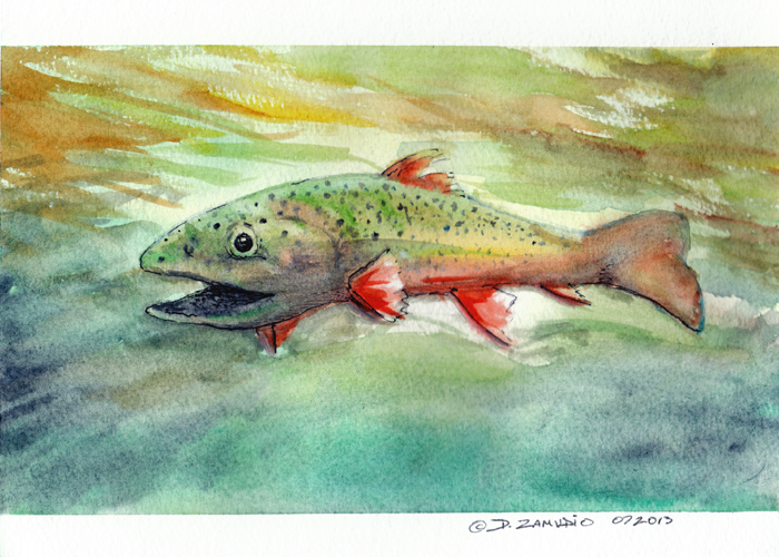 Marine, trout, watercolor,david zamudio